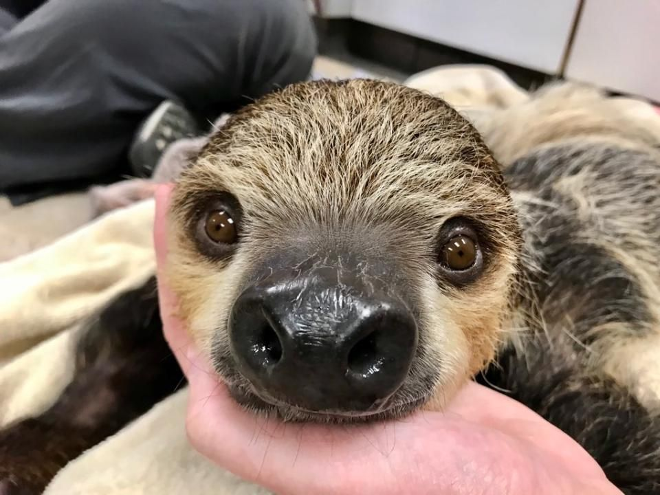 A Sloth's Journey - Part THREE